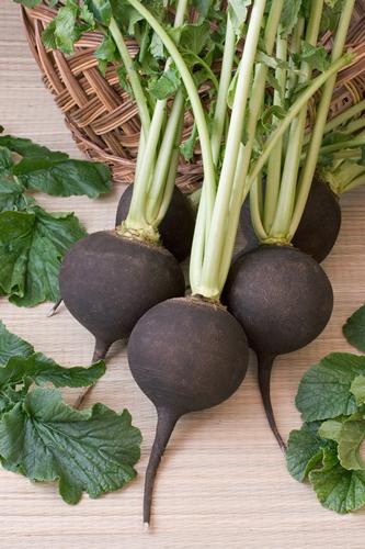 black-radish-bsp